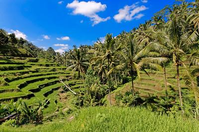 Tegalalang Rice Terrace, Bali, Indonesia (2)