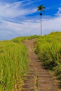 Ubud Ridge Path, Bali, Indonesia (4)