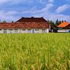 Urban Ricefields in Canggu, Bali (1)