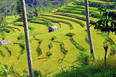 Eastern Bali Rice Terraces