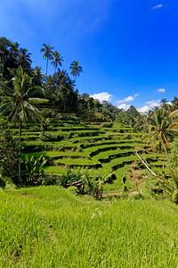 Tegalalang Rice Terrace, Bali, Indonesia (3)