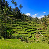 Tegalalang Rice Terrace, Bali, Indonesia (3)