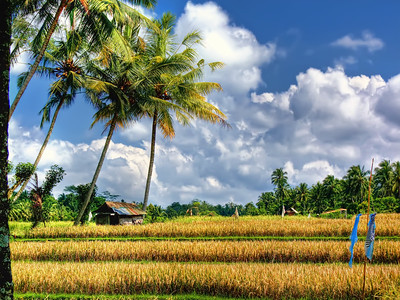 Bali Rural Idyll, Ubud, Central Bali