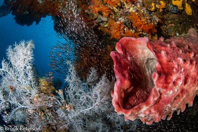 Sponge and Glass fish
