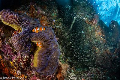 Clown Fish Glass Fish