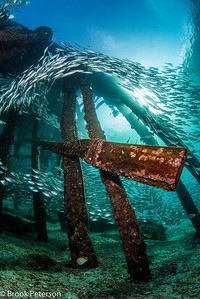Pier of Fishes