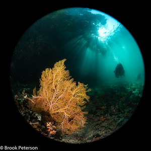 Sunbeams on a Diver