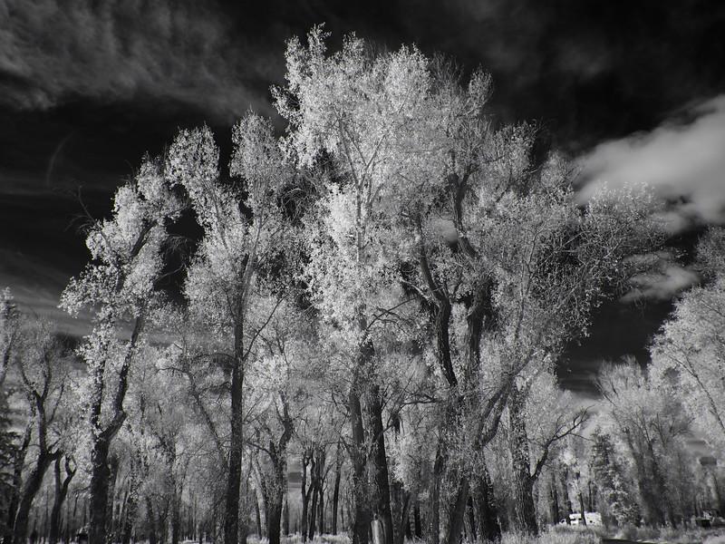 Teton Cottonwoods