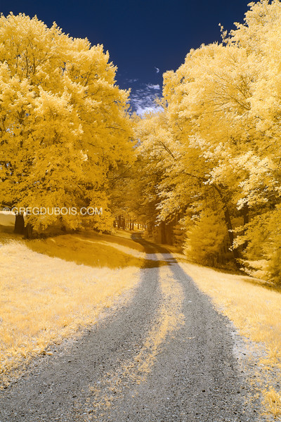 Dirt Road Through Golden Trees in Andover Massachusetts