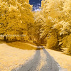 Dirt Road Through Golden Trees in Andover Massachusetts