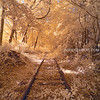 Old Abandoned Railroad Train Tracks in Eastern Massachusetts