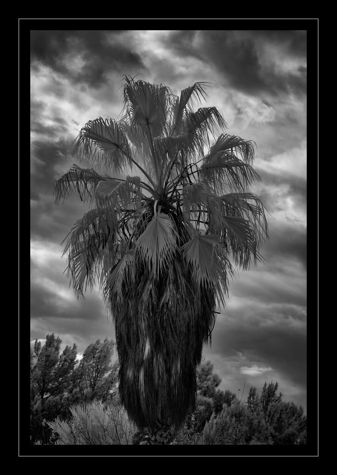 Stormy Palm