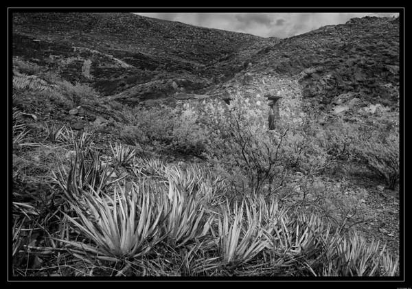 Cactus Camo Shack
