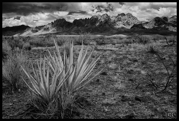 Yucca in view of the Organ Mountains  Date:July 7, 2012  Camera: Full Spectrum converted Canon 40D Lens: Canon EF24-70 f2.8L Filter:Astronomik Proplanet 742 Clip-in Tripod: Induro AT313 with BH-2 Ball Head Exposure: ISO 100, f11