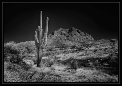 """Desert Majesty"""