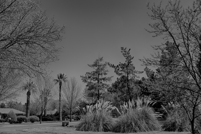 B&W converted color shot - Clear Skies - Canon 7D