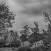 B&W converted color shot - with Clouds - 30D - Shot within 5 minutes of IR40D B&W conversion