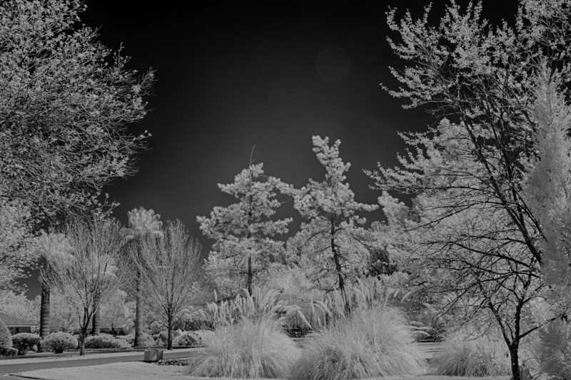 B&W converted IR shot - Clear Skies -full-spectrum Canon 40D with 720nm IR filter installed.