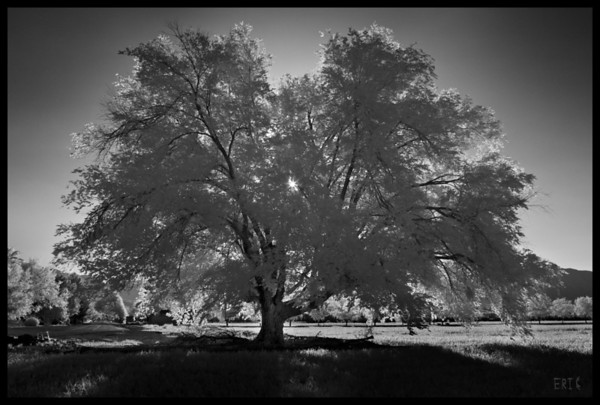 Grandfather Cottonwood  Date:May 29, 2012  Camera: Full Spectrum converted Canon 40D Lens: Canon EF24-70 f2.8L Filter:Astronomik Pro-Planet 742 Tripod: Induro AT313 with BH-2 Ball Head Exposure: ISO 100, f11 - 5 exposure blend