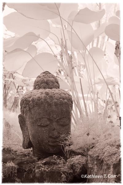 Buddha at Paleaku