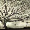 Tree, Hilo