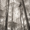 Palm Forest II
