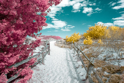 Island Beach in Infrared