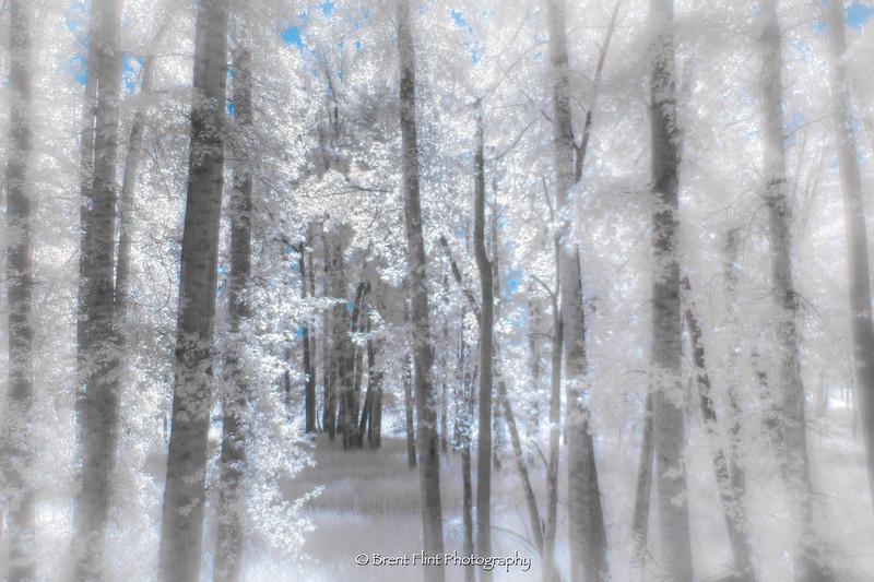 DF.4710 - dreamy forest, Kootenai National Wildlife Refuge, ID.