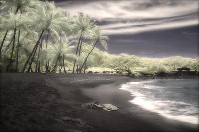 Turtle, Punaluu Black Sand Beach