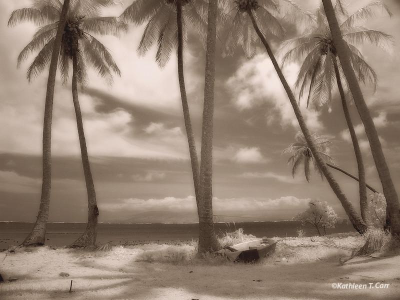 Palms I