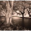 Trees, Punalu'u
