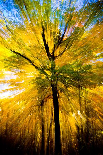 Fall Zoom Burst