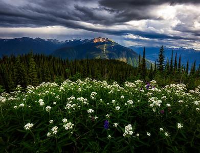 Revelstoke Wild Flowers