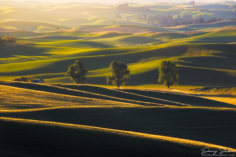 Rural Layers