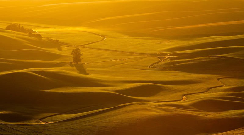 Golden Palouse
