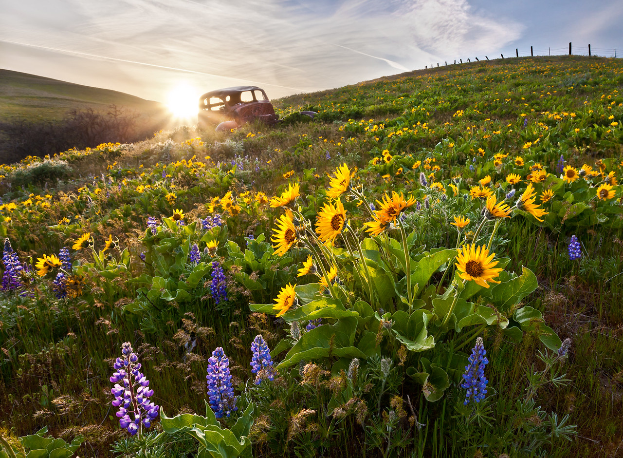 Columbia Hills Wildflowers