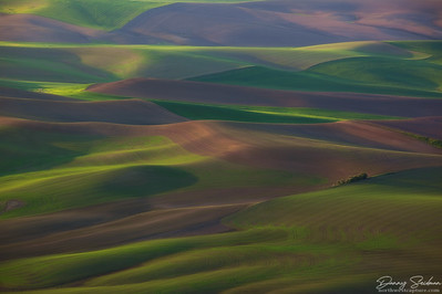 Shadows form among the Palouse's rolling hills briefly after sunrise.