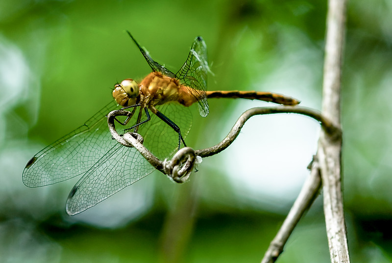 DragonFly-01