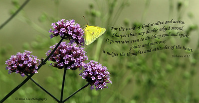 Purple Flowers & Clouded Yellow Butterfly