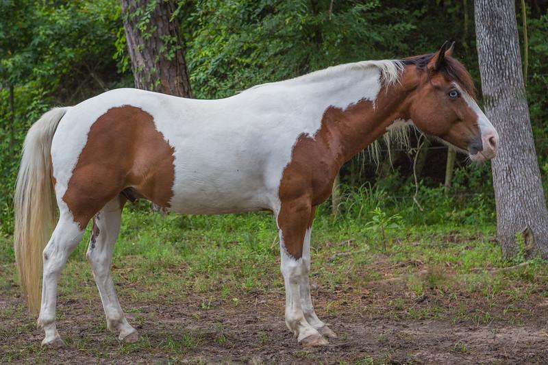 Bob, horse