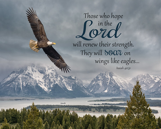 Those who hope in the LORD will renew their strength. They will soar on wings like ealges...  ~Isaiah 40:31  This image was created using 3 different photographs.