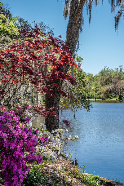 Middleton Place - Charleston, South Carolina, USA