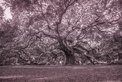 Angel Oak - Charleston, SC, USA