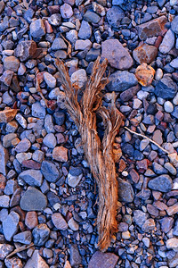Dead Tree Branch & Pebbles