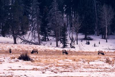 Four Elks