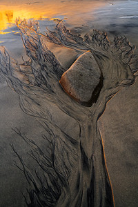 Tree Of Sand
