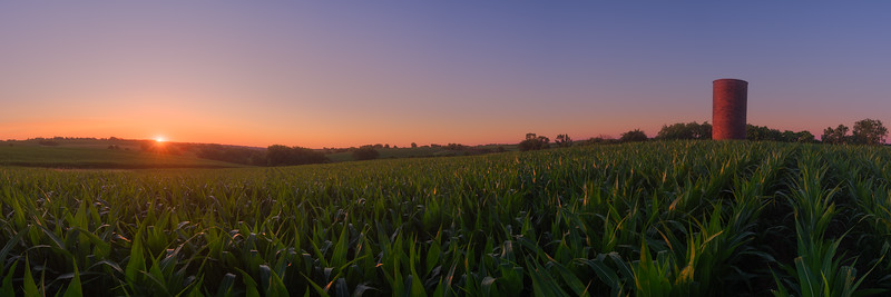 Untitled (Cornfield and Gentle Hills)