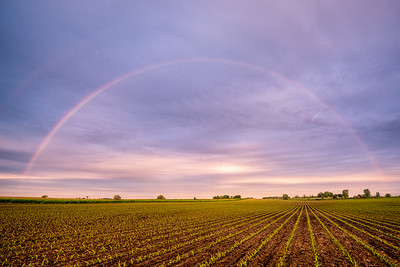 Spring Morning Rainbows Over Establishing Corn