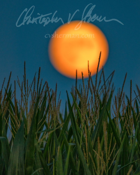 "Another shot of last night's full ""corn"" moon rising."