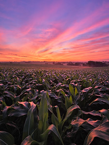 Memorable Iowa Cornfield Sunrise